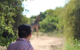 Safari-Giraffe-South Africa