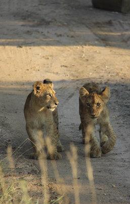 9 belangrijkste tips voor het krugerpark zuid afrika homes of africaMooiste Plekken Krugerpark.htm #15
