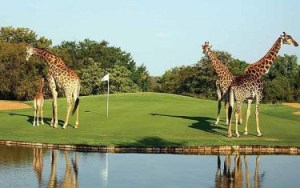 Golf in Zuid-Afrika