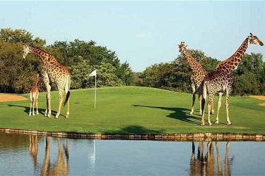 Golf in Zuid-Afrika Krugerpark