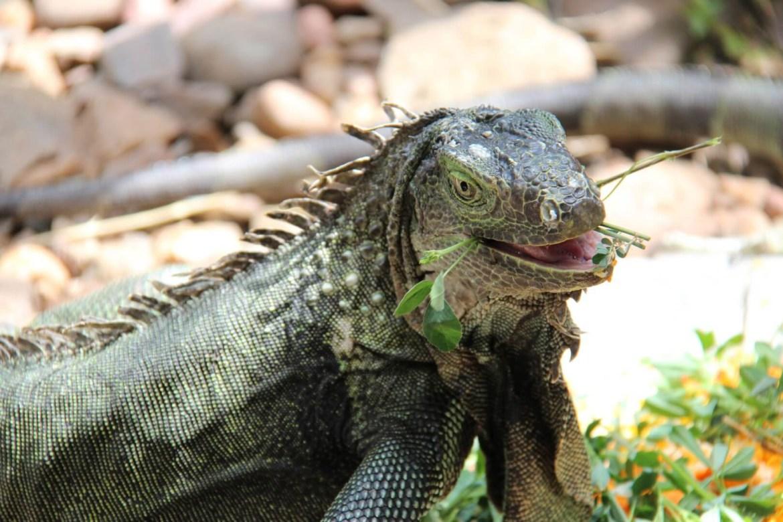 Kinyonga Reptile Centre - Hoedspruit