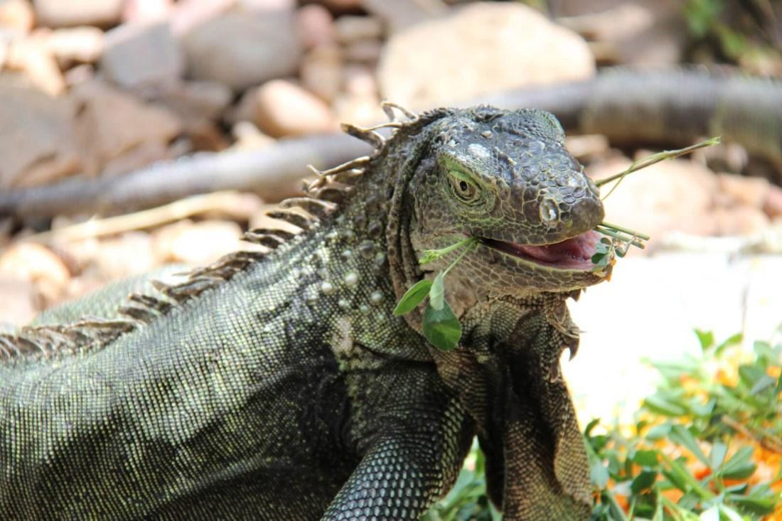 Khamai Reptile Centre