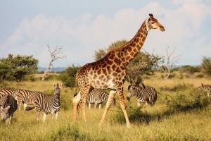 Krugerpark - South Africa