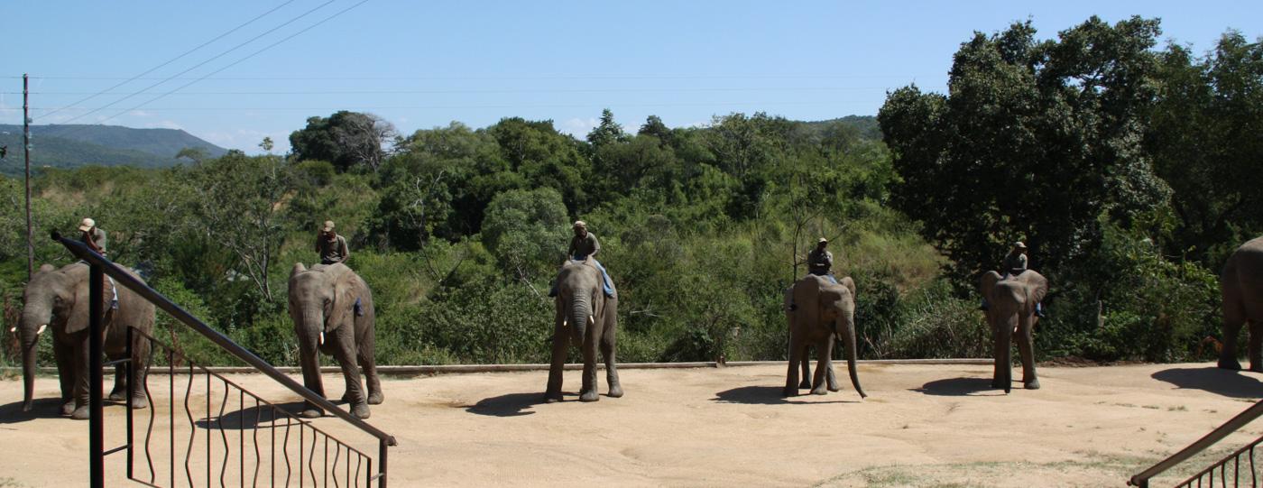 Elephant Riding South Africa