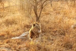 5 reasons to visit Kruger National Park
