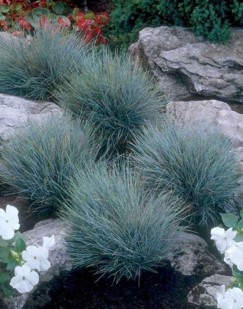 58 low maintenance small front yard landscaping ideas