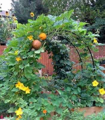 07 affordable backyard vegetable garden design ideas