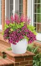 10 fabulous summer container garden flowers ideas