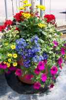 26 fabulous summer container garden flowers ideas