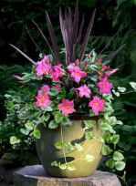 37 fabulous summer container garden flowers ideas