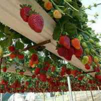 50 amazing diy vertical garden design ideas