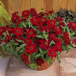 63 fabulous summer container garden flowers ideas