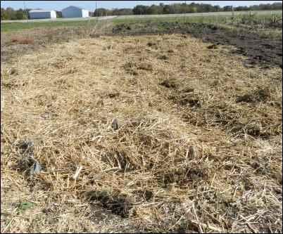 grow garlic beds