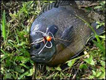 bluegill, bream, Building Multi-use Ponds on the Homestead, Where Should a New Pond Go, Benefits of a Multi-use Pond, what fish should be stocked in a pond, multi use pond, homesteading