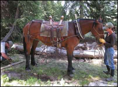 Using Horses to Pull, Using workhorses, horse power
