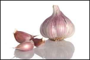 garlic, medicinal herbs, homesteading