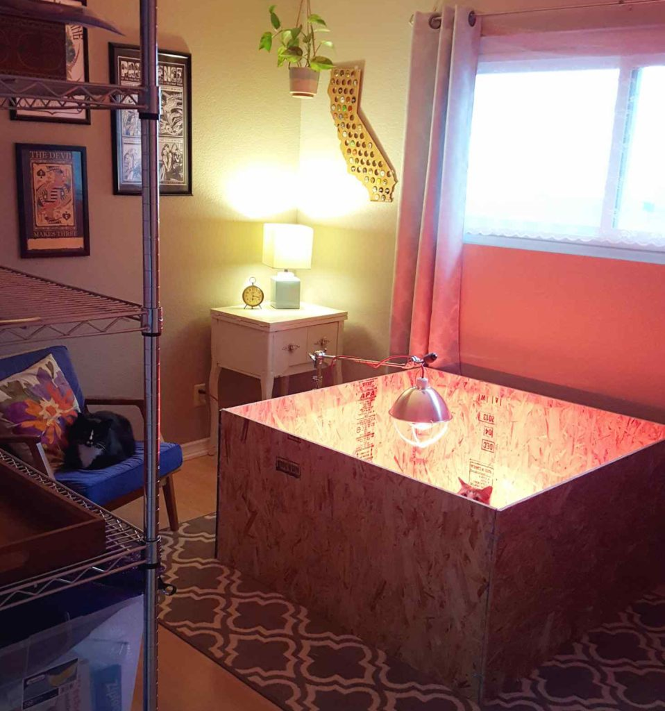 An image of a 4x4 ft plywood box, two feet tall, sitting in the middle of a room. There is a patterned carpet below it, a heat lamp hanging over it, a chair nearby with a cat laying on it, and another cat inside the plywood box, peering up over the edges.