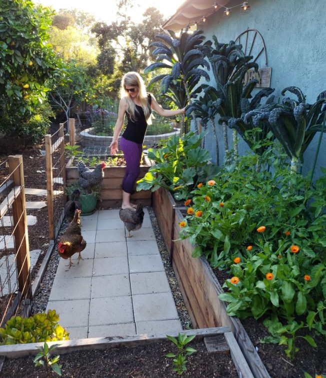An image of DeannaCat in the coop garden, where a set of four large raised beds form a wide U-shape, with a large portion almost up against the blue house. She is standing in the middle of the U shape, and can reach all areas of the beds from the middle. In the raised beds are