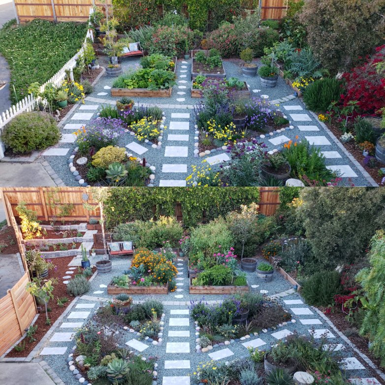 Top half: Spring 2018 Bottom half: Fall 2018. Note the new corner addition, terracing, and fence we built! Instead of weedy pest-laden ice plant, the corner now houses 5 fruit trees and dozens of perennials.