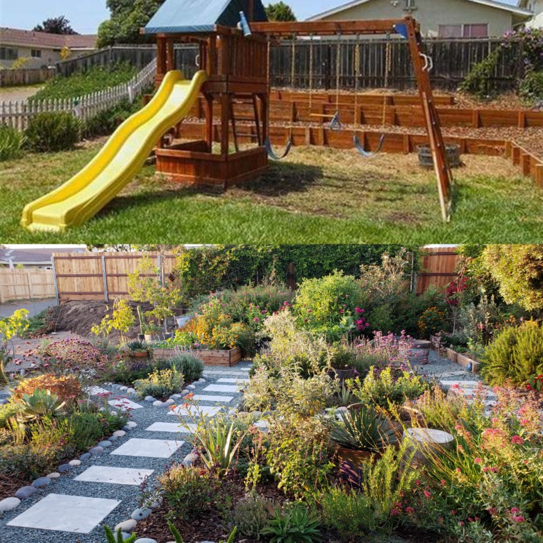 Top half: A photo from the front yard from our real estate listing when we bought in July 2013. A bare lawn and childs play set.  Bottom half : August 2018. Note the white picket fence to the left is missing, and so is that mound of ice plant. We are about to get part of the driveway cut out and removed, and expand the front yard garden by a couple hundred square feet! Everything is lush and grown in, just waiting for the new corner to be finished.