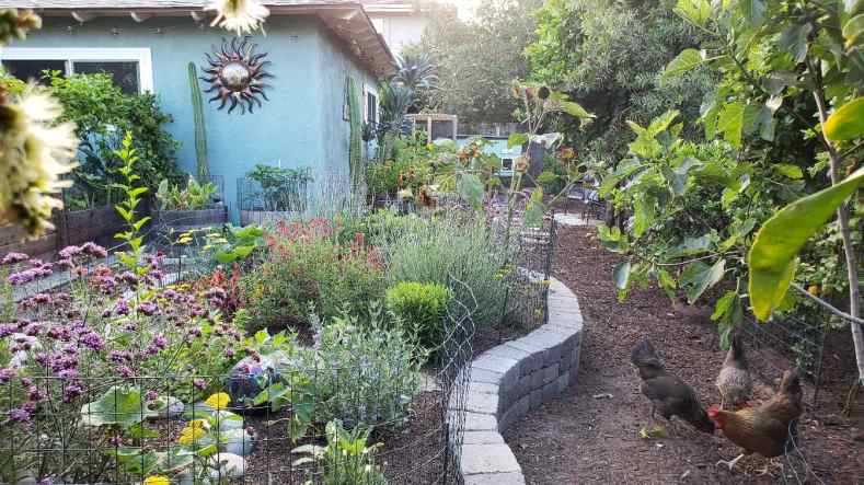 A raised, curvy garden bed made of stone. It is a dedicated space for pollinator-friendly perennials and annuals like verbena, sunflowers, yarrow, and sage, all blooming in purple and yellow.  The patio garden is to the left, with several raised beds. The chicken coop and additional garden area are straight ahead past the stone island.