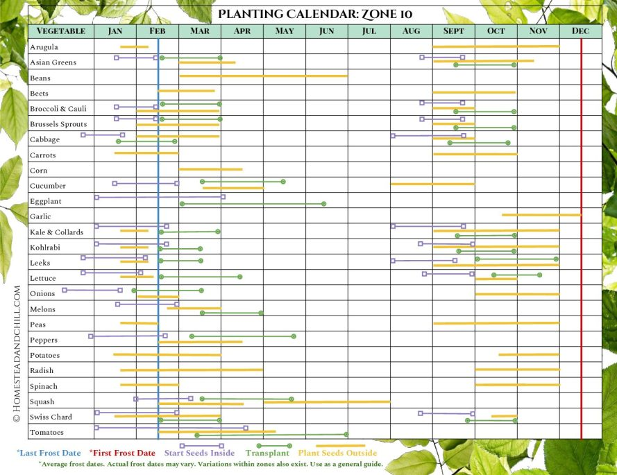 A garden planting calendar for USDA growing zone 10. This shows gardeners the best time to start seeds indoors, transplant, or directly plant their vegetable seeds in the garden, depending on where they live.