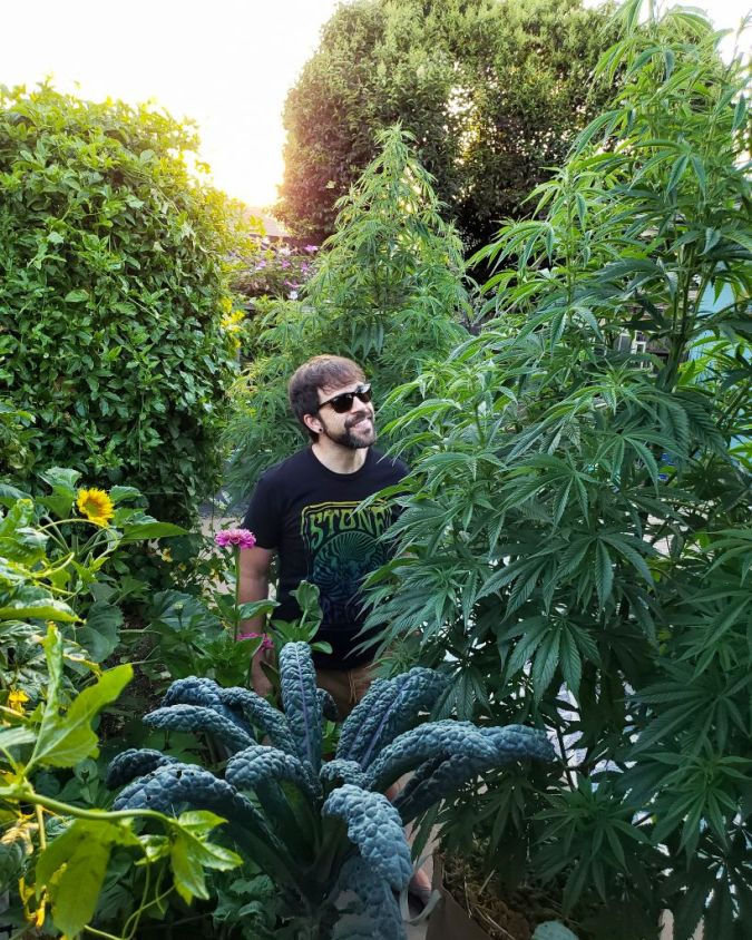A man stands amongst very tall cannabis plants, smiling and looking up at them since they're much tall than he is. The setting is on a back yard garden patio, where there are also raised garden beds full of kale, sunflowers, a passionfruit around him. The sun is setting in the background.