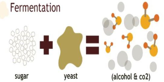 Image of the chemical reaction in fermentation, showing cartoon sugar molecules plus yeast equals alcohol and c02.