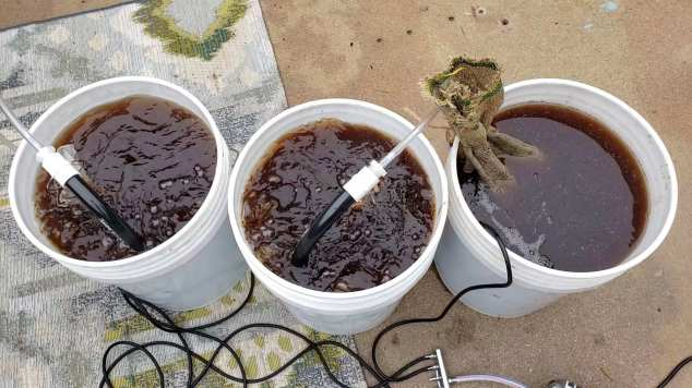 Three five gallon buckets are full of clean rain water, the water is being used for worm cast tea. There are two snake bubblers, one each in two buckets. The water has turned brown from the worm castings and will create a nutrient rich tea for the garden.