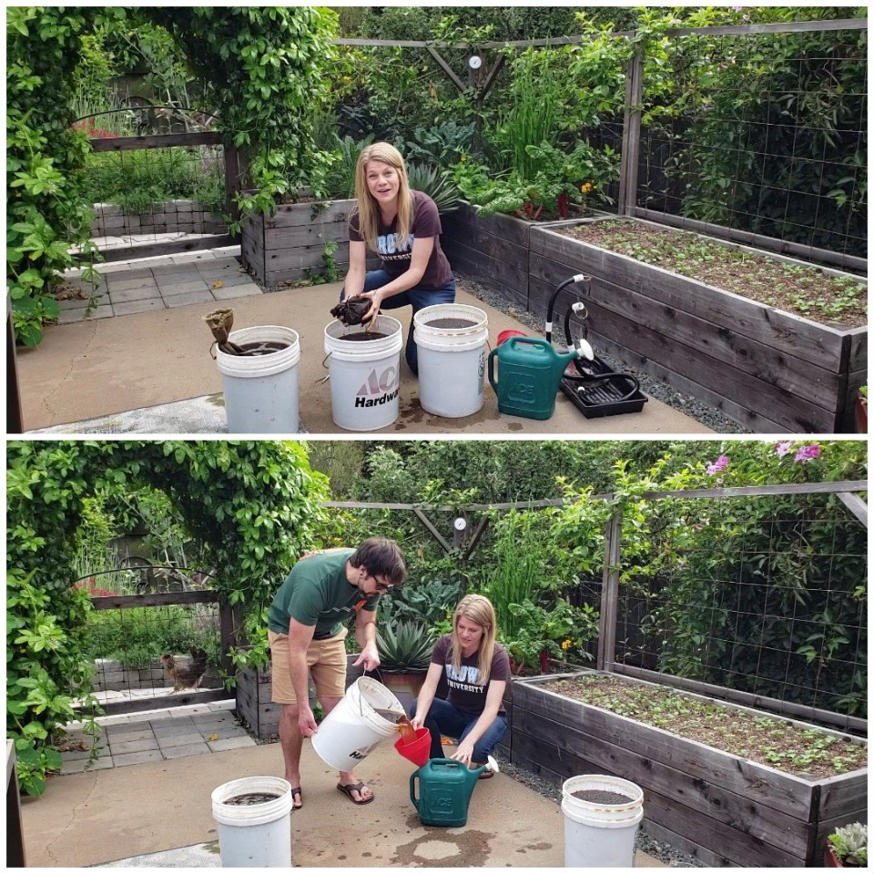 Two images of Deanna and Aaron on the back patio garden area. They're working over 5-gallon buckets of brown liquid, the compost tea. In one, Deanna is squeezing a teabag of compost over one of the buckets. In the other, Aaron is holding up one of the 5-gallon buckets, poised over a watering can and funnel. There are raised garden beds in the background behind them.