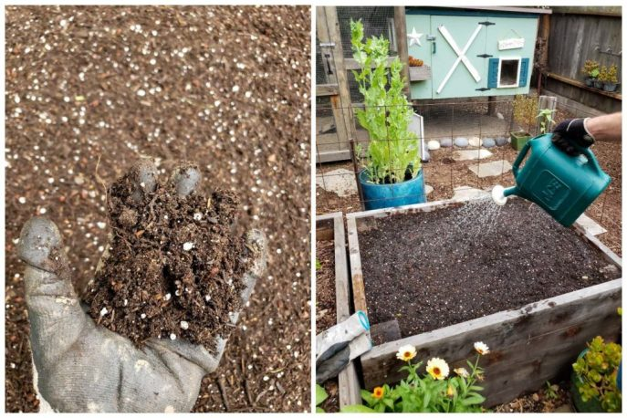 Two images. On is a hand, holding fluffy looking soil. The other is a watering can over the raised bed, pre-wetting it before the seeds are sown.