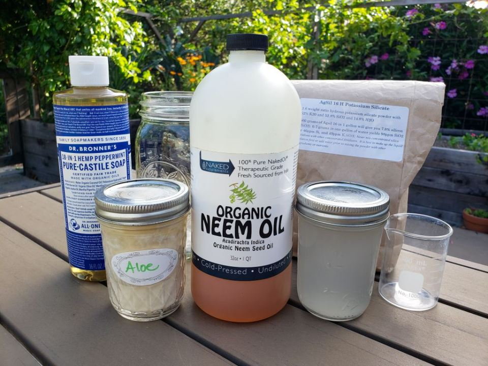 Displayed are the various types of products that will be used for preventative pest sprays. Shown are neem oil, aloe vera powder, Dr. Bronner's soap, and AgSil 16 H (potassium silicate). Along with the ingredients are a small beaker and a quart size mason jar.