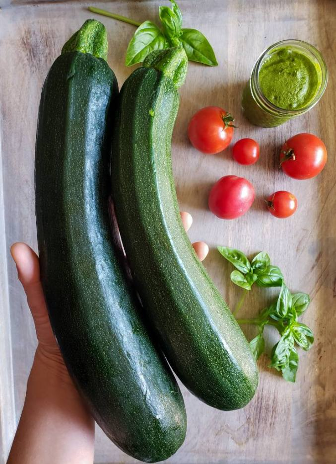 Two medium to large zucchini being held above a cutting board that has 5 red tomatoes of different size, a couple leaves of basil, and a small jar of pesto on it.
