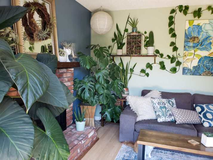 A corner of a room is pictured with a fireplace and mantle off to the left, there are houseplants or various sizes and shapes littered about the room, some even on the mantle.