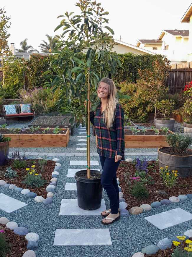 DeannaCat is standing next to a young Hass avocado tree in a 15 gallon nursery pot. She is standing in the front yard amongst a number of flowering perennials, annuals, raised garden beds full of vegetables, shrubs, vines, and trees.