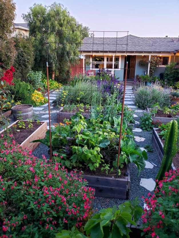 A front yard garden in full bloom, various raised beds contain vegetables of various types while perennials, trees, and plants of other various types are littered throughout the yard in a type of organized chaos. The foreground of the photo has beautiful pink blossoms from a salvia plant which stand it in stark contrast to the blues and purples of most of the plants as well as the evening sky.