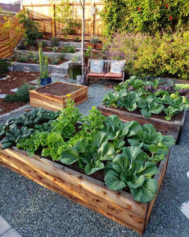 An image of the corner of a fenced in property. There are two wooden raised garden beds with various greens planted in rows in them. They range from bok choy, to tatsoi, to mustard greens and kale - all perfect for cut and come again harvests. Another smaller bed to the left shows only a few green garlic sprouts starting to protrude  from the soil. Behind that there is a cactus in ceramic pot,  a wooden sitting bench, salvia and sage flowing over a wooden terrace as well as a stone terrace in the left corner that has three tiers. Each tier containing a small fruit tree and smaller perennials.  The fence has horizontal slotted fence boards and the sun is shing in from that side, casting slotted light throughout the corner terrace.
