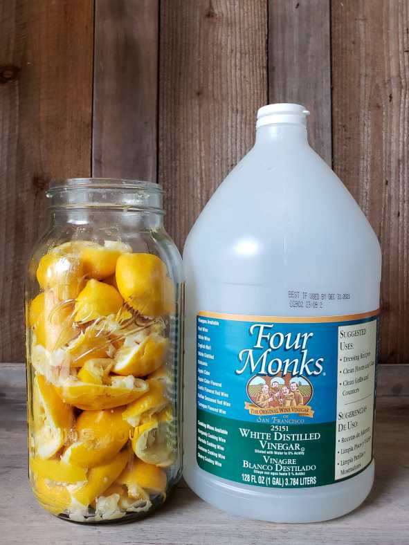 A half gallon mason jar full with discarded halved lemons after they have been squeezed of their juice sits next to a gallon jug of Four Monks white distilled vinegar. The background is a barn wood type backdrop.