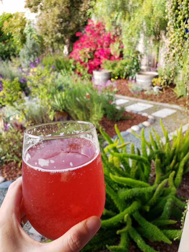 A hand is holding a stemless wine glass full of kombucha that is ruby red in color, the effervescence is obvious with bubbles clinging to the sides of the glass. Beyond the glass is a beautiful yard with gravel pathways marked with stone pavers, there are various plants of all types with colors ranging from green to purple, and red.