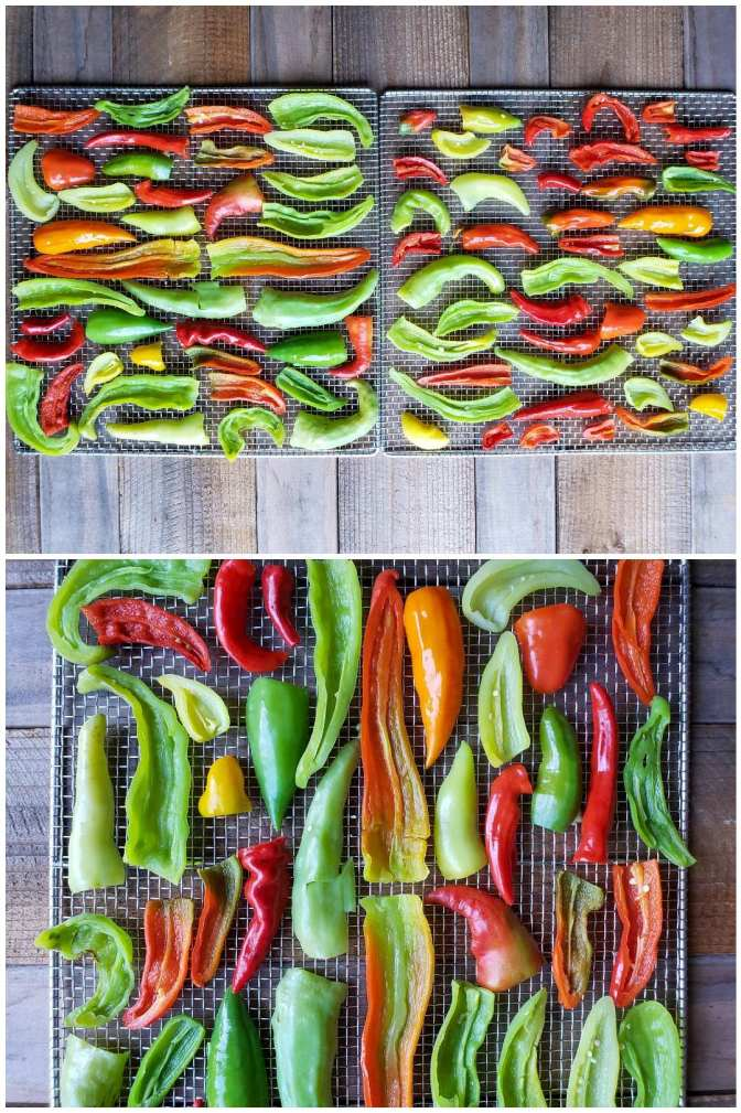 Three dehydrator drying racks are shown full of the sliced chili peppers, they are neatly set out onto the trays, making sure the edges of the chilis are not touching each other, nor are they overlapping.