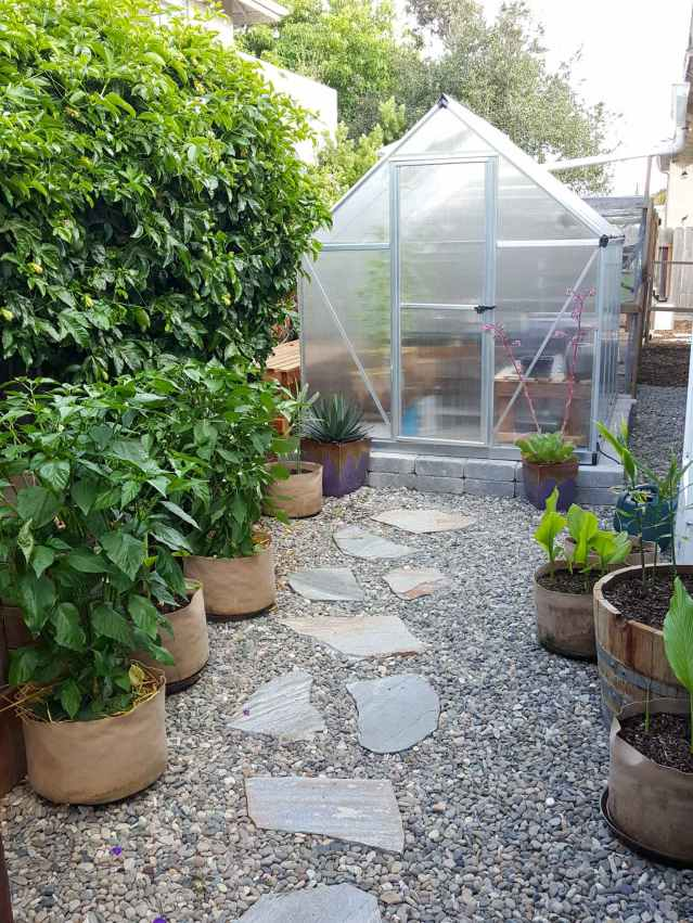 A greenhouse is shown in the back center of the image, there is a massive vining plant, pepper plants in fabric grow bags, and young turmeric just sprouting and continuing to grow in fabric grow bags as well. The ground is gravel and there is a flagstone pathway to the greenhouse. There are a few other potted plants such as succulent and agave.