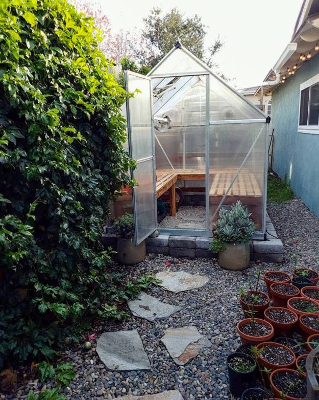 A hobby greenhouse is shown next to a house, the inside of the greenhouse is lined with benches made from slats of wood. There is a lush green vine just outside the door of the greenhouse and the front door is flanked by two potted plants.