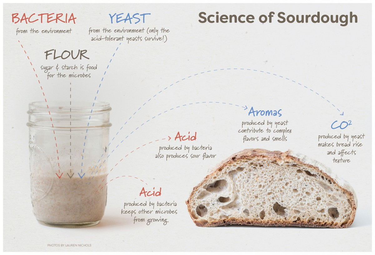 How To Feed Your Sourdough Starter Storage Amp Care Tips