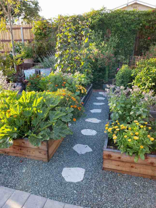 There is a wall of trellises full of green vines along the backside of a yard. There are garden beds in the foreground full of vegetables and flowering annuals. A trellis is set up in the back of one of the beds which is full of a climbing bean. The ground is gravel lined with stone pavers.