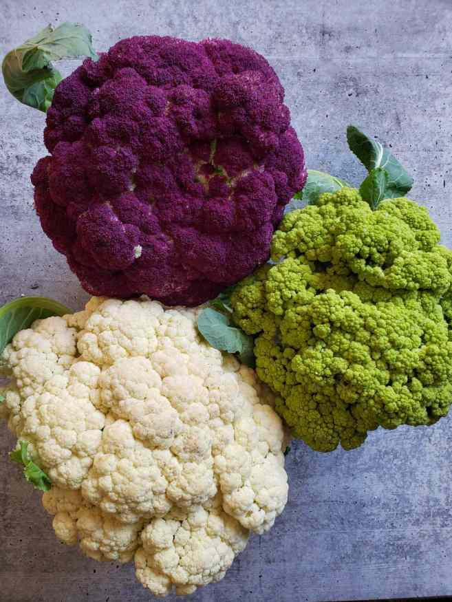 Three different varieties of freshly harvested heads of cauliflower sit atop a washed concrete surface. One head is purple, one is light green and one is white in color.