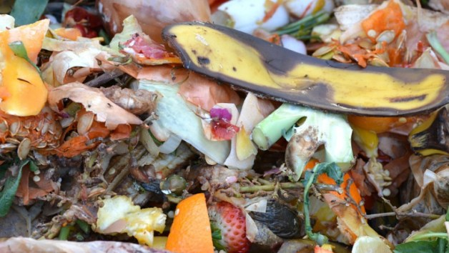 An image of what constitutes a green source in compost. Banana peels, berries, pumpkin guts, broccoli stems among others are just a few items that are considered sources of nitrogen for a compost pile.