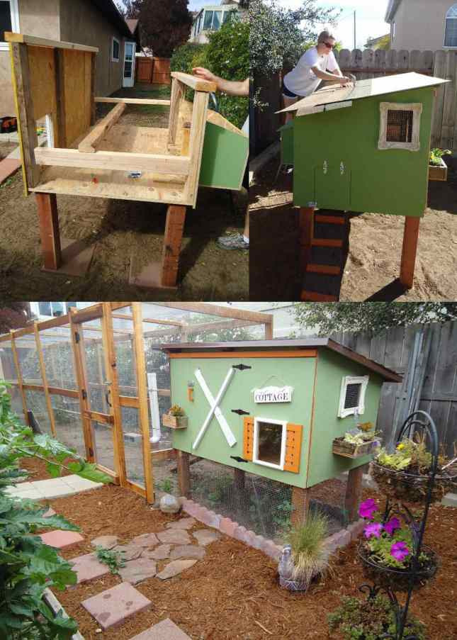 A three part image collage, the first image shows the chicken coop n mid construction. There is a plywood floor with a plywood side and nest boxes hanging off of one end. There are 2x4's running along each side in different directions for support of the structure. There are 4x4's protruding out of the bottom of the coop which are the legs and feet of the coop. The second image shows DeannaCat on a small step ladder nailing roof shingles to the top of the  chicken coop roof. The third image shows the coop and run once fully complete, there is hardware cloth predator proofing lining the run and underneath of the coop.