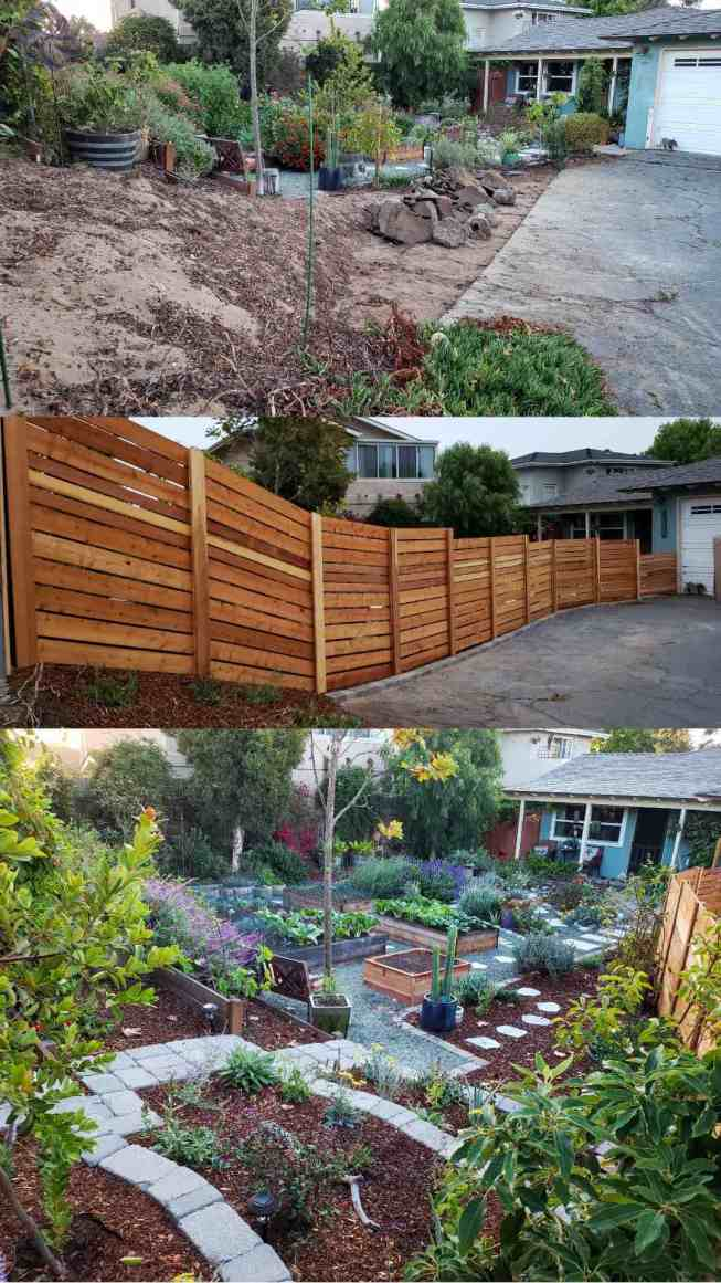 Three part image collage of the last front yard renovation project. The first image shows a large portion of asphalt and ice plant has been removed along with the white picket fence. The second image shows the newly constructed horizontal fence that has been constructed in its place, it is made of redwood boards and there are steps in the height of the fence, starting off at 6 feet tall while finishing close to 4 feet once you reach the gate to the front yard. The third image has been taken from the back corner of the front yards newly constructed stone terrace. There are perennial and annual plants planted in the three sections of terracing along with a fruit tree planted in each on as well. The terrace has bee mulched with bark as is the perimeter of the yard. Flowering plants, shrubs, vines, trees, cacti and vegetable plants are seen throughout the image.