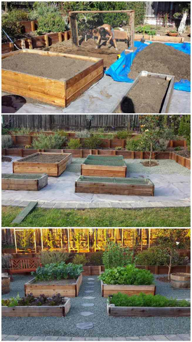 A three part image collage, similar to the three just shown, however, this is showing how we corrected our initial mistake. The first image shows Aaron bending a the waist as the dirt and weeds from the final bed is taken out. In the foreground you can see that construction grade weed block fabric has been laid down and the other bed as been refilled with weed free soil. The second image shows the area halfway redone, The four garden beds are in place and the back half of the area is covered in gravel, the front half is still visible which shows the weed block fabric. The third image shows the area once it is completely finished. Raised beds full of vegetables, the surrounding area is landscaped with gravel and paver lined walkways. You must be prepared to correct a mistake when you decide to start a homestead.