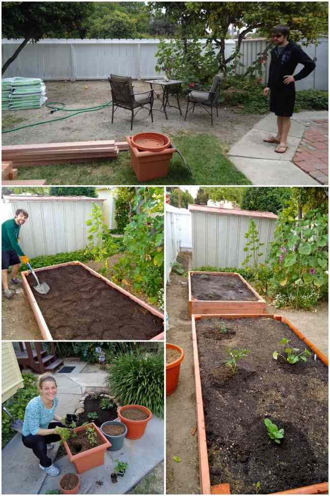 A four part image collage showing what one can do in a rental property with limited space. The images vary from getting the necessary supplies to build raised beds such as wood and soil, filling the raised bed with soil once it is built, planting out the raised beds with various plants of choice, in this case it was tomatoes, squash, peppers,and basil, and finally using containers to grow vegetables. They can easily be moved and don't take up as much space.